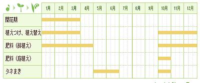 クリスマスローズ 栽培期間グラフ