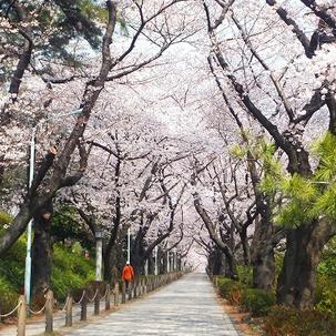 青山霊園 坂道