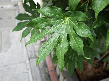 梅雨の雨 花